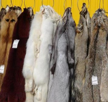 Enjoy Swiping Discount on Fur Coats For Sale - EarningDiary